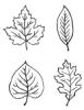 Set of 4, Leaf Designs
