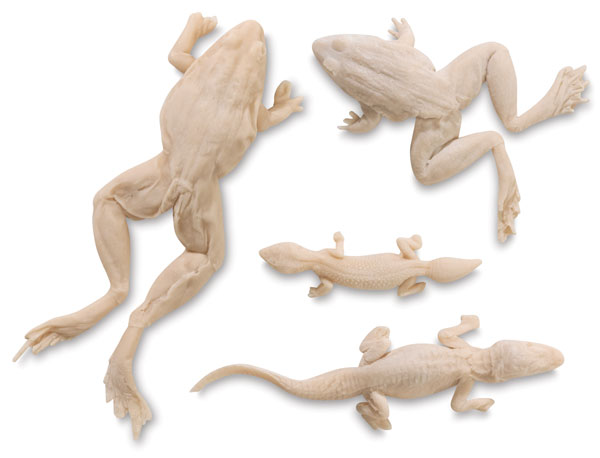 4-Piece Reptile Set