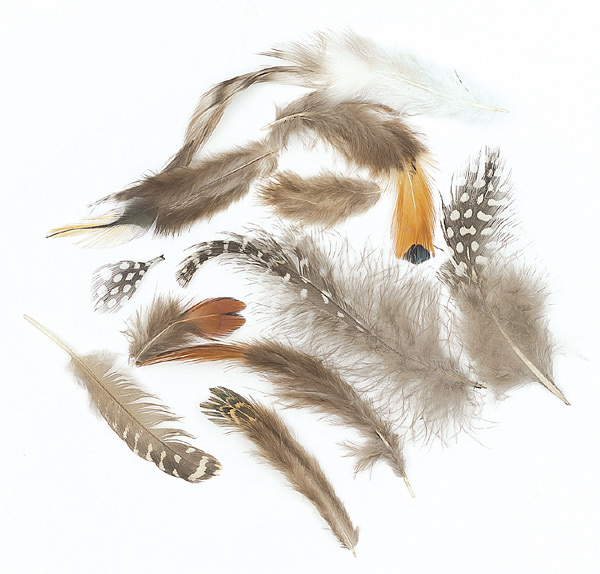 Feather Assortment