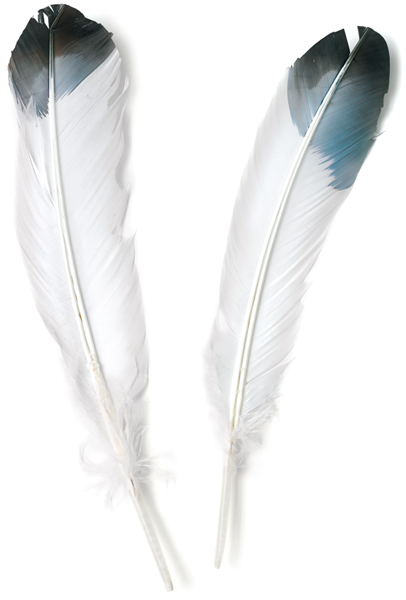 Imitation Eagle Feathers, Pkg of 12