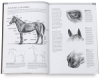 Drawing Made Easy: Horses and Ponies