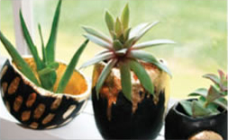 Pinch Pot Air Plant Vases