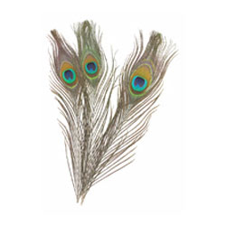 Creativity Street Peacock Feathers