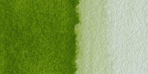 Olive Green Yellowish