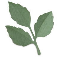 Leaves(Finished Example)