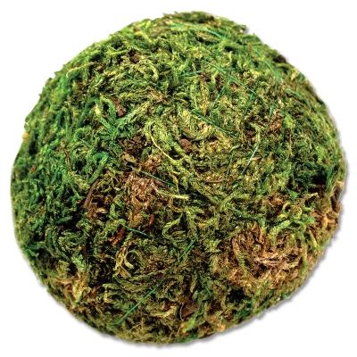"""Moss Ball, 2"""""""