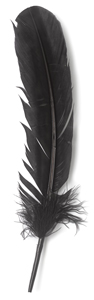 Black Turkey Feather