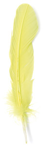 Yellow Turkey Feather