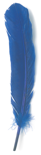 Blue Turkey Feather