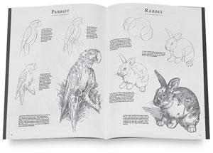 Drawing Pets